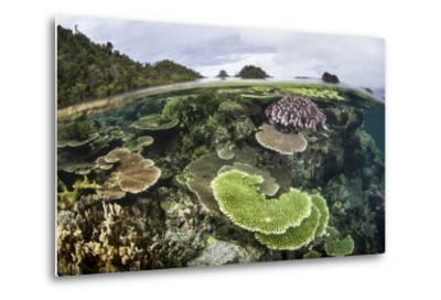 Reef-Building Corals in Raja Ampat, Indonesia-Stocktrek Images-Metal Print