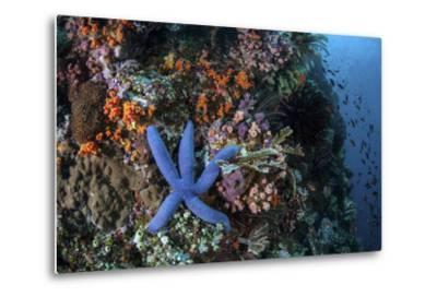 A Blue Starfish Clings to a Reef in Komodo National Park, Indonesia-Stocktrek Images-Metal Print