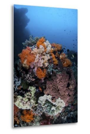Soft Corals, Sponges, and Other Invertebrates on a Reef in Indonesia-Stocktrek Images-Metal Print