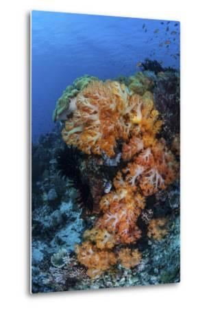 A Beautiful Cluster of Soft Coral on a Coral Reef in Indonesia-Stocktrek Images-Metal Print