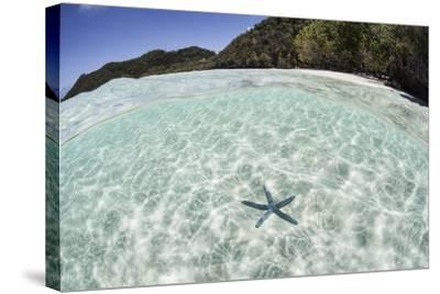 A Blue Starfish on the Seafloor of Raja Ampat, Indonesia-Stocktrek Images-Stretched Canvas Print