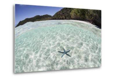A Blue Starfish on the Seafloor of Raja Ampat, Indonesia-Stocktrek Images-Metal Print