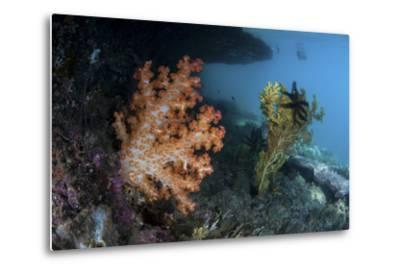 A Soft Coral Colony and Invertebrates in Raja Ampat, Indonesia-Stocktrek Images-Metal Print