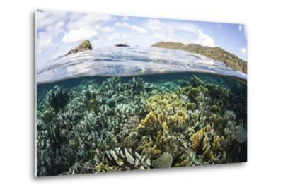 A Beautiful Coral Reef in Raja Ampat, Indonesia-Stocktrek Images-Metal Print