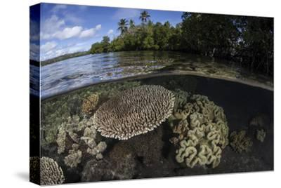A Healthy Coral Reef Grows in the Solomon Islands-Stocktrek Images-Stretched Canvas Print
