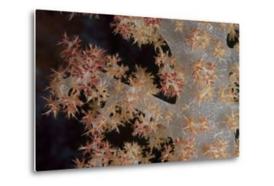 Close-Up of Tree Coral on a Fijian Reef-Stocktrek Images-Metal Print