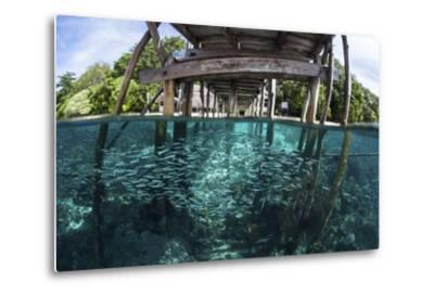 A School of Silversides Beneath a Wooden Jetty in Raja Ampat, Indonesia-Stocktrek Images-Metal Print