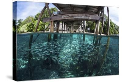 A School of Silversides Beneath a Wooden Jetty in Raja Ampat, Indonesia-Stocktrek Images-Stretched Canvas Print