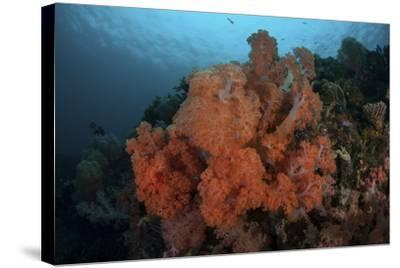 Vibrant Soft Corals Thrive on a Deep Reef in Indonesia-Stocktrek Images-Stretched Canvas Print