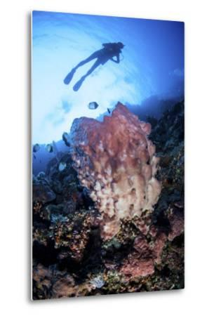 A Large Barrel Sponge Grows on a Reef Dropoff Near Sulawesi, Indonesia-Stocktrek Images-Metal Print