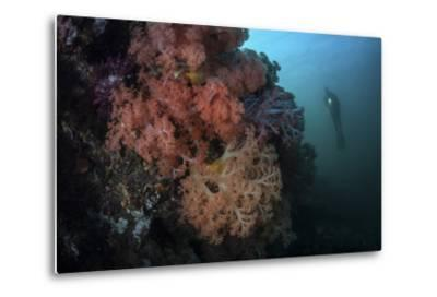 Soft Corals and Invertebrates Grow on a Deep Reef in Indonesia-Stocktrek Images-Metal Print