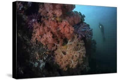 Soft Corals and Invertebrates Grow on a Deep Reef in Indonesia-Stocktrek Images-Stretched Canvas Print