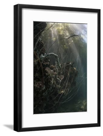Sunlight Descends Underwater and over a Set of Whip Corals-Stocktrek Images-Framed Premium Photographic Print