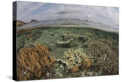 A Beautiful Reef Grows in Komodo National Park, Indonesia-Stocktrek Images-Stretched Canvas Print