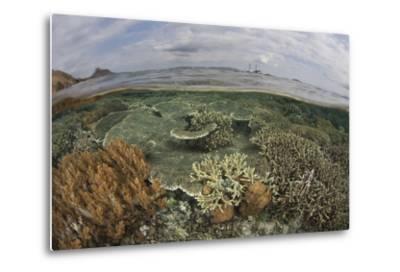 A Beautiful Reef Grows in Komodo National Park, Indonesia-Stocktrek Images-Metal Print