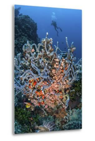A Scuba Diver Explores a Colorful Coral Reef in Indonesia-Stocktrek Images-Metal Print