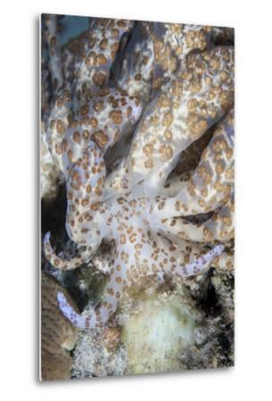 A Solar-Powered Nudibranch Crawls across the Seafloor-Stocktrek Images-Metal Print