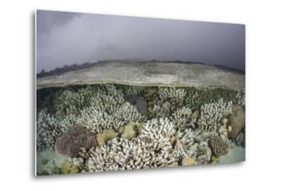 A Fragile Coral Reef Grows in Shallow Water in the Solomon Islands-Stocktrek Images-Metal Print