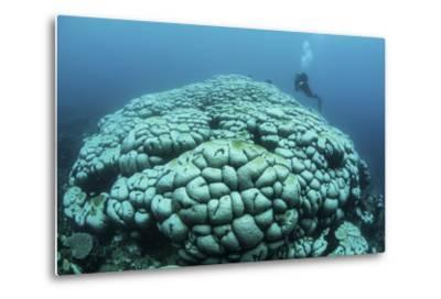 Corals are Beginning to Bleach on a Reef in Indonesia-Stocktrek Images-Metal Print