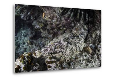 A Crocodilefish Lays on the Seafloor in the Solomon Islands-Stocktrek Images-Metal Print