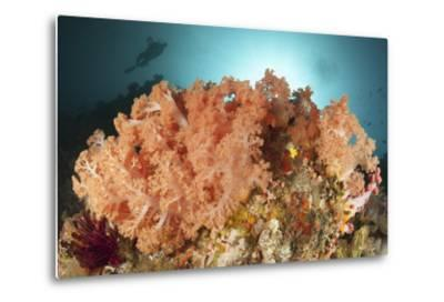 Diver Looks on at a Colorful Komodo Seascape, Indonesia-Stocktrek Images-Metal Print