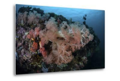 Vibrant Soft Corals Thrive on a Deep Reef in Indonesia-Stocktrek Images-Metal Print