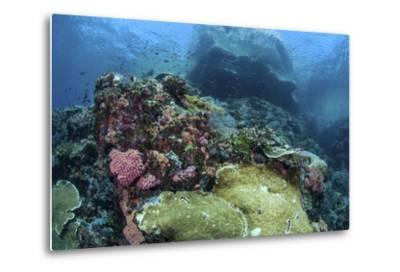 A Beautiful Coral Reef Thrives on an Underwater Slope in Indonesia-Stocktrek Images-Metal Print