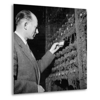 Director Yoes Kressmann, Looking at the Chateau Lafite Kept for His Own Personal Consumption--Metal Print