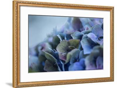 Autumn Hydrangea IV-Rita Crane-Framed Photographic Print