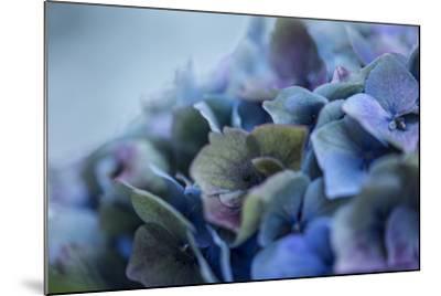 Autumn Hydrangea IV-Rita Crane-Mounted Photographic Print