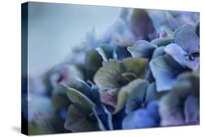 Autumn Hydrangea IV-Rita Crane-Stretched Canvas Print
