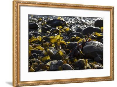 Rocky Shore II-Rita Crane-Framed Photographic Print