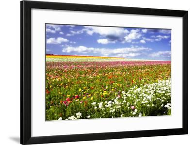 Field of Flowers III-Alan Hausenflock-Framed Photographic Print