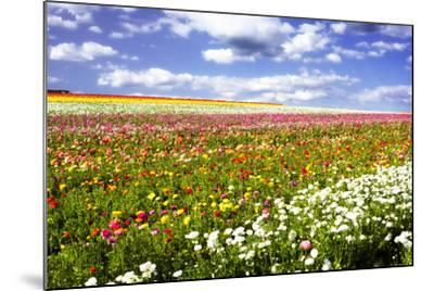Field of Flowers III-Alan Hausenflock-Mounted Photographic Print