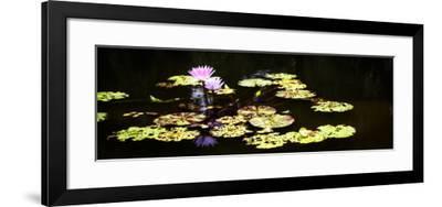 Lake Lilies I-Alan Hausenflock-Framed Art Print