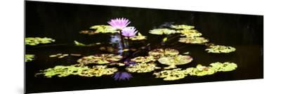 Lake Lilies I-Alan Hausenflock-Mounted Art Print
