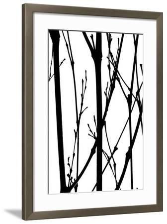 Branch Silhouette IV-Monika Burkhart-Framed Photographic Print