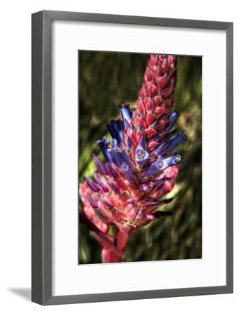 Blue and Red Flower-George Johnson-Framed Photographic Print