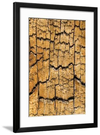 Pine Patterns I-Kathy Mahan-Framed Photographic Print