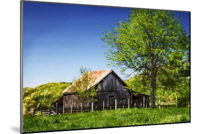 Old Backyard Barn-Alan Hausenflock-Mounted Photographic Print