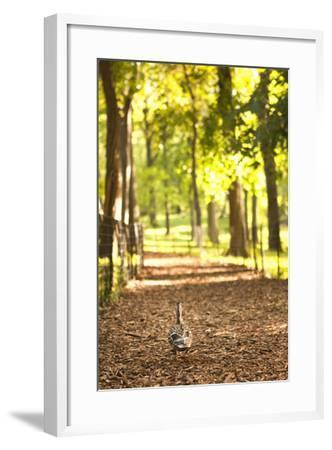 Duck Walk-Karyn Millet-Framed Photographic Print