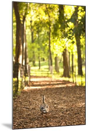 Duck Walk-Karyn Millet-Mounted Photographic Print
