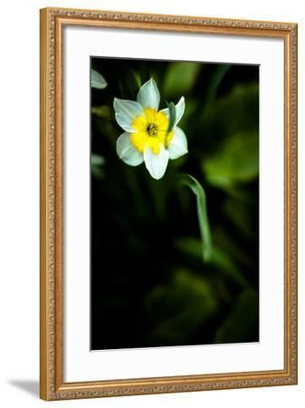 Daffodil II-Beth Wold-Framed Photographic Print