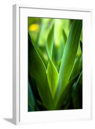 Abstract Green Leaves II-Beth Wold-Framed Photographic Print