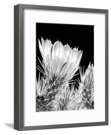 Armed and Beautiful BW-Douglas Taylor-Framed Photographic Print