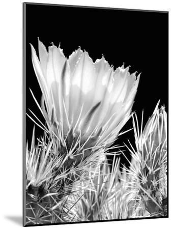 Armed and Beautiful BW-Douglas Taylor-Mounted Photographic Print
