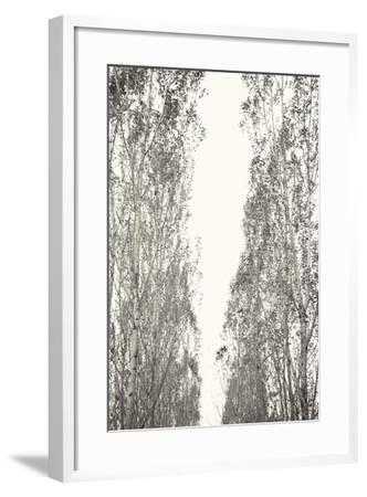 Trees III-Karyn Millet-Framed Photographic Print