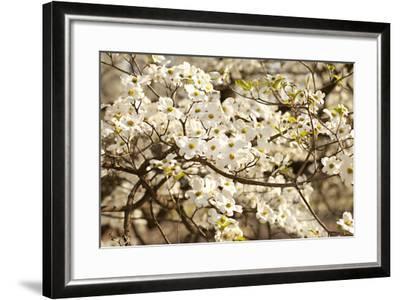 Cherry Blossoms III-Karyn Millet-Framed Photographic Print