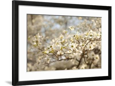 Cherry Blossoms II-Karyn Millet-Framed Photographic Print
