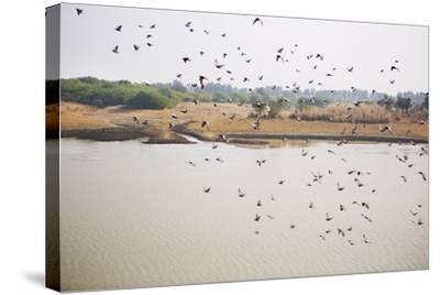 Birds I-Karyn Millet-Stretched Canvas Print